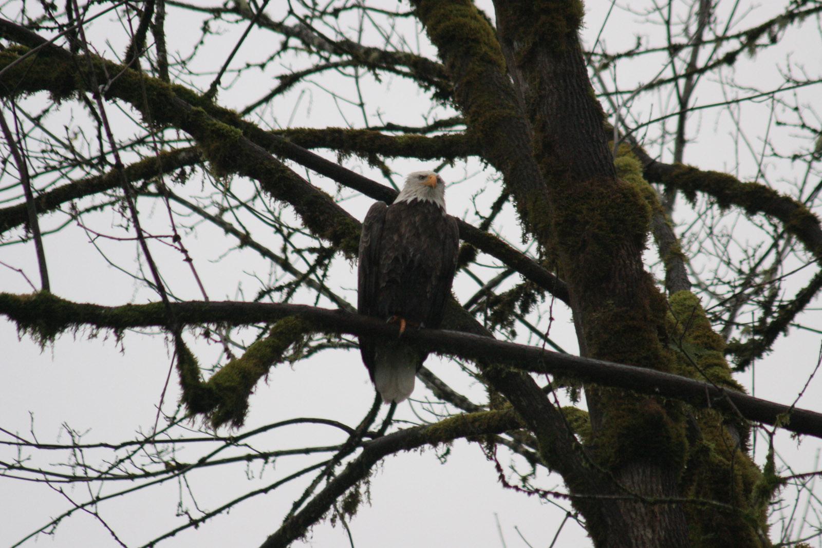 2013-01 eagle-14