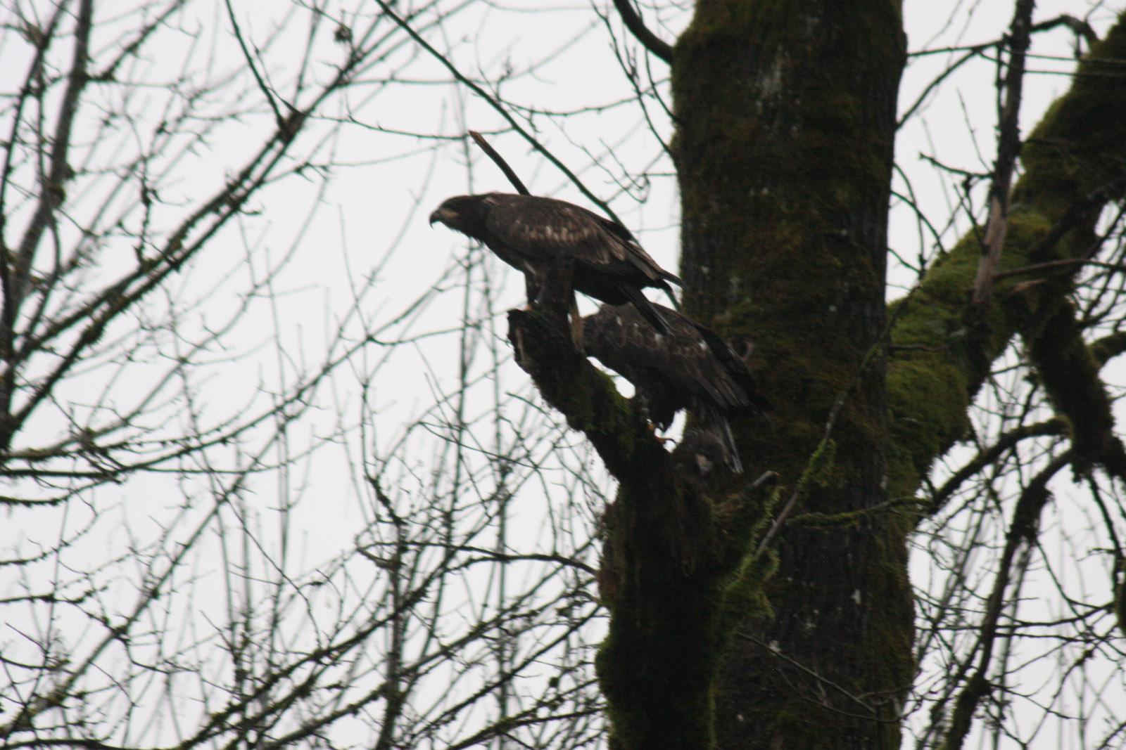 2013-01 eagle-16